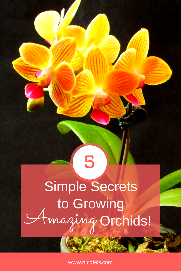 5 Simple Secrets to Growing Amazing Orchids! No Fail Orchids!!! Amazing!