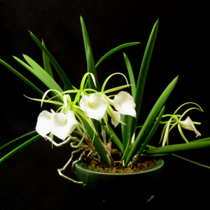 5 Simple Secrets to Growing Amazing Orchids! No fail orchids!
