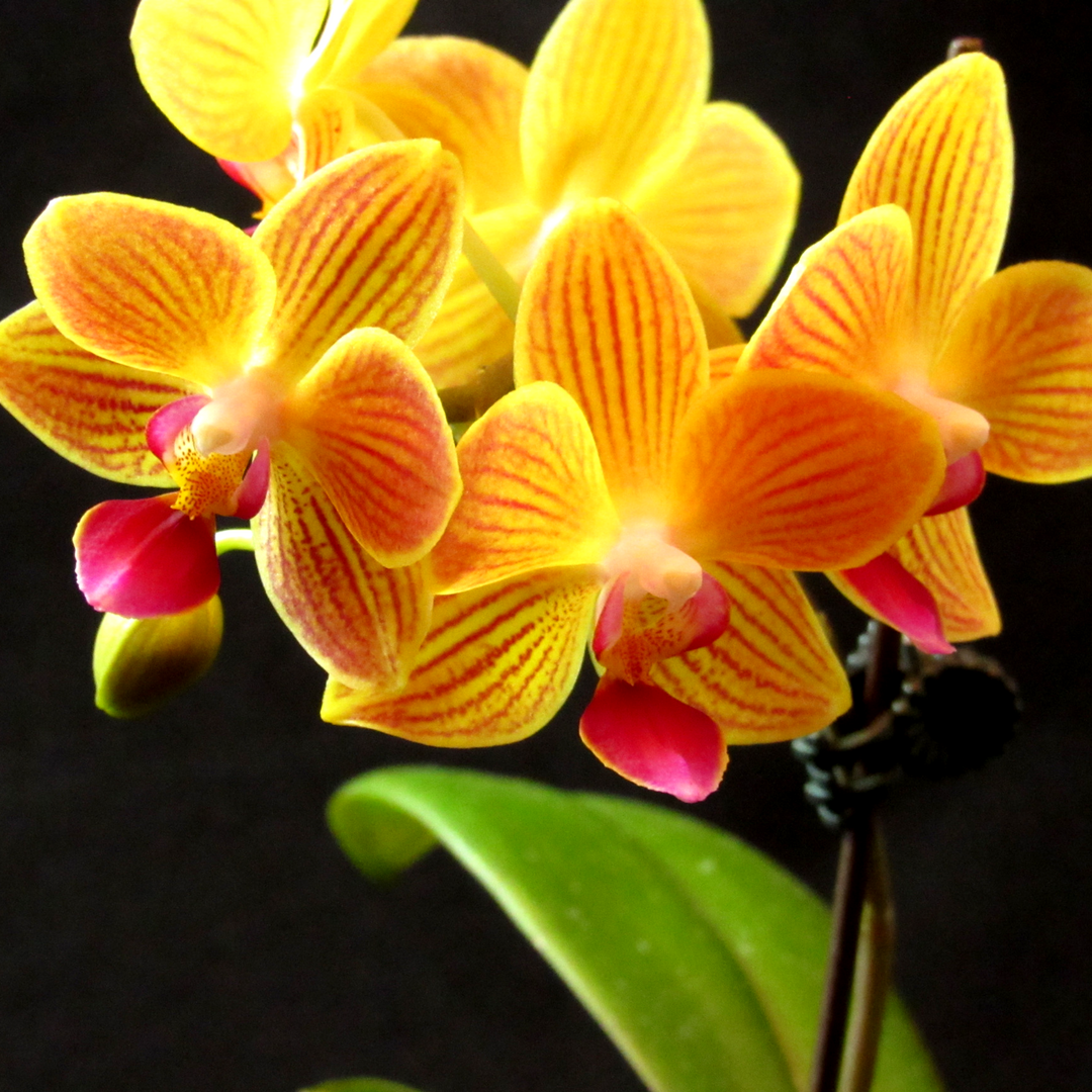5 Simple Secrets To Growing Amazing Orchids Nicole Is