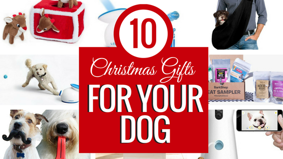 10 Christmas Gifts for Your Dog! Because even man's best friend deserves a great Christmas! www.NicoleIs.com Dog Gifts | Christmas Gifts | Christmas Gift Guide | Pet Gifts | Holiday Gift Guide | Dog Toys | Dog Treats | Christmas